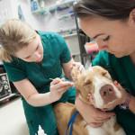 Cosa sapere sul tumore del cane